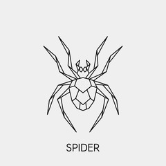Geometric spider. Polygonal linear abstract insect. Vector illustration.
