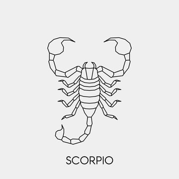 Geometric scorpion. Polygonal linear abstract animal. Vector illustration.