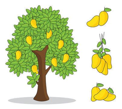 yellow mango on tree with white background. isolated doodle hand drawing.