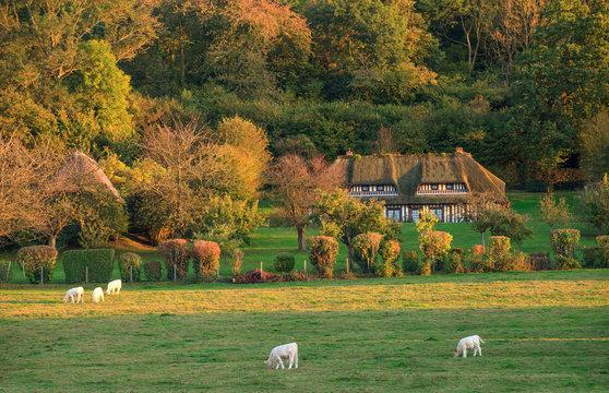 Chaumière dans le marais vernier en automne, Normandie