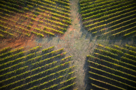 The shape of a vineyard