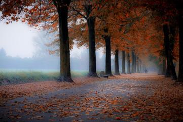 Foto op Aluminium Bossen autumn colors view