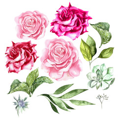 Watercolor set with flowers of roses and leaves.