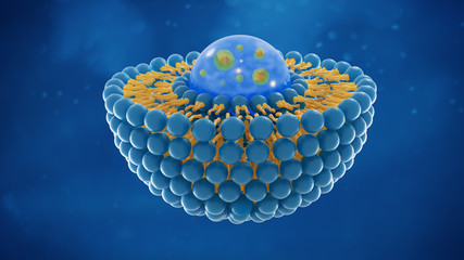 Liposome structure cell 3D rendering