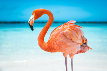 Photo sur Plexiglas Flamingo fenicottero rosa