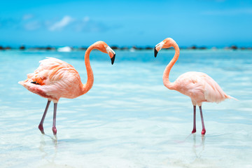 Poster de jardin Flamingo fenicotteri rosa
