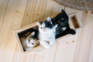 bande de petits chatons