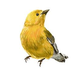 bird hand drawn illustration,art design
