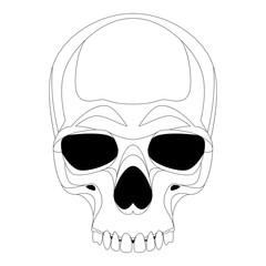 human skull vector illustration lining draw   front
