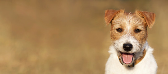 Dog smile - web banner of a smiling happy jack russell pet puppy