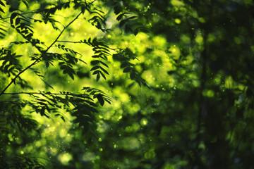 green rowan leaf on light blured bokeh background