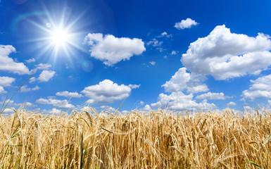 Milder Spätsommer im Schwabenland: Weizenfelder, Ernte, Getreide, blauer Himmel, Landwirtschaft, Wolken :)