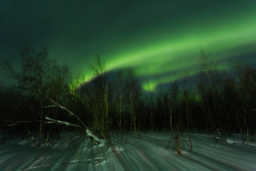 Aurora Over the winter forest, Yamal