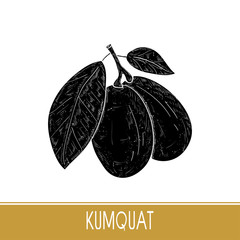 Kumquat. Fruit, leaves, branch. Black silhouette on white background.