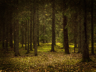 Grunge forest landscape in autumn