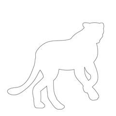 vector, sketch of cheetah, jaguar standing