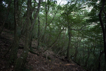 Forest in Japan