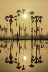 Refection of Sunset with Palm tree