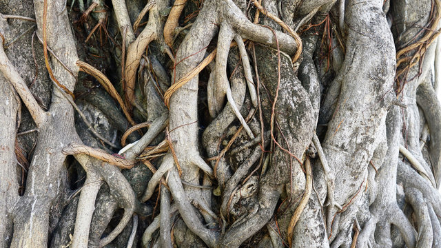 roots root tree nature background old wood giant brown garden