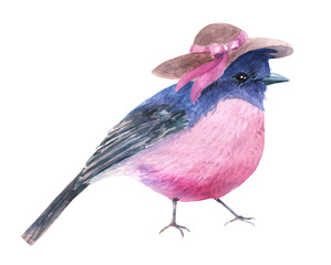 watercolor drawing of a little bird illustration