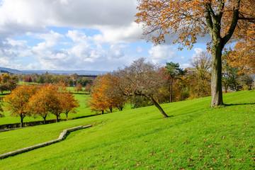 Autumn Trees in Bellahouston Park Glasgow.