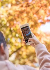 Autumn leaves, Fall season blur background with traveller using smartphone camera taking photo of red orange yellow colorful tree of seasonal change