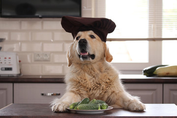Golden retriever with plate of cucumbers.