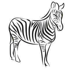 Набросок зебры.