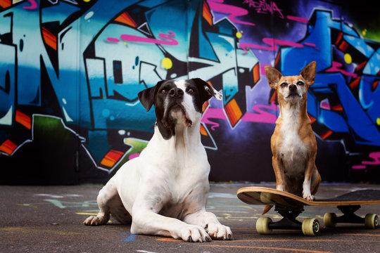 Straßenhunde