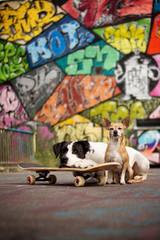 Hunde mit Skateboard