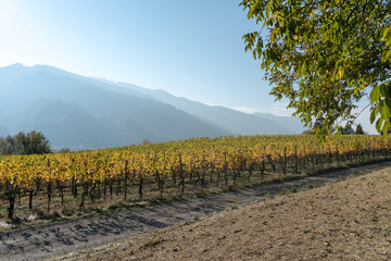 Wall Mural - panorama landscape with alpine village and golden vineyard under cloudless sunset sky with mountain silhouettes