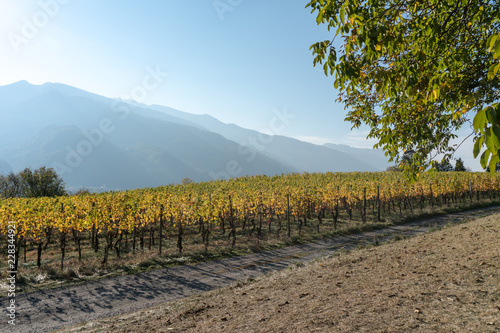 Wall mural panorama landscape with alpine village and golden vineyard under cloudless sunset sky with mountain silhouettes