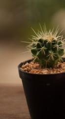 cactus with blur blackground