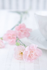 Pink carnation flowers and a cup on a white background
