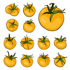 Set with isolated yellow tomatoes. Vector. Illustration