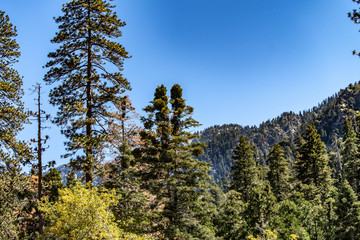 Aerial view of Forest Falls and Oak Creek in the San bernardino Mountains and National Forest with blue sky, green and yellow trees and plants