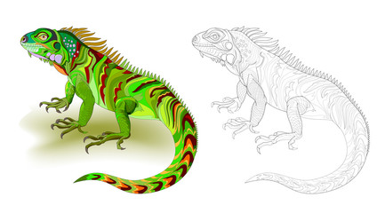 Fantasy illustration of cute green lizard iguana. Colorful and black and white page for coloring book. Worksheet for children and adults. Vector cartoon image.