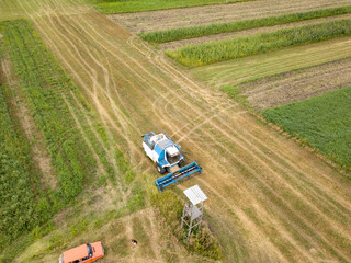 Wall Mural - Panoramic aerial view from the drone of the field after harvest. The combine harvester reaps a crop in the field.