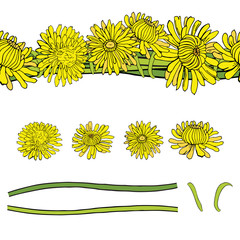 Vector set with yellow dandelions isolated on a white background and patterned brush. Illustration