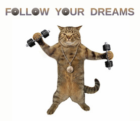 The cat athlete with a sports medalis holding dumbbells. Follow your dreams. White background.