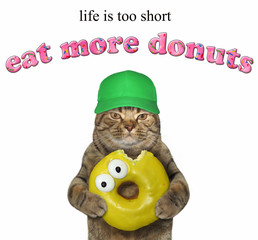 The cat in green cap holds a yellow bitten doughnut. Life is too short. Eat more donuts. White background.