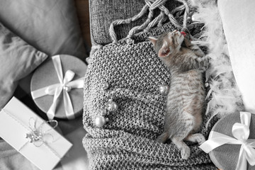 A cute gray kitten lies on a gray plaid in a Christmas decoration