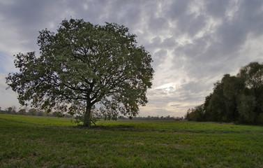 Pejzaż polski - łąki nadwiślańskie drzewo