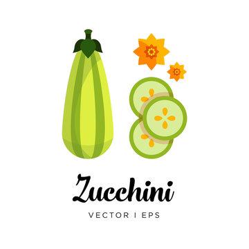 Elegant green fresh striped zucchini  vector editable illustration. Ripe green squash sliced, seeds, flowers, simple flat style.