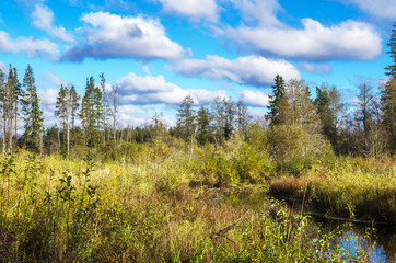 a flock of clouds above the autumn forest floats across the blue sky