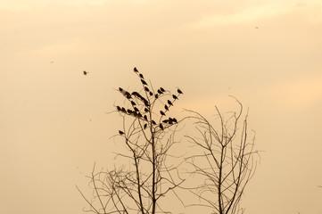 Flock of birds on tree