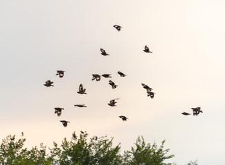 A flock of birds in the sky