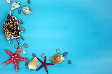 Aqua background with starfish and seashells