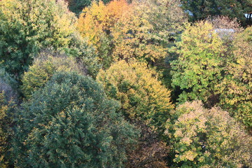 Herbstbäume von Oben