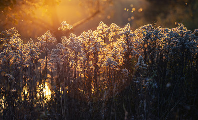 Evening nature. Plants in the light of the setting sun. Beautiful background for presentations. Pink and gold shades. Silhouettes of plants in the light of the autumn sunset. The contour of plants in